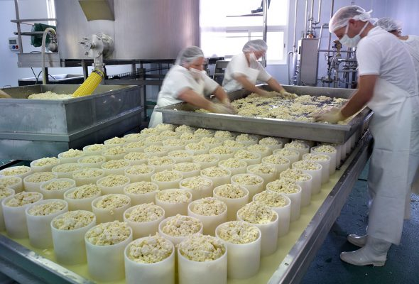 Fotografía industrial de la fábrica de queso azul La Peral, Illas, Asturias.